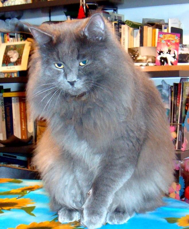 Adottare Un Gatto Pag 8