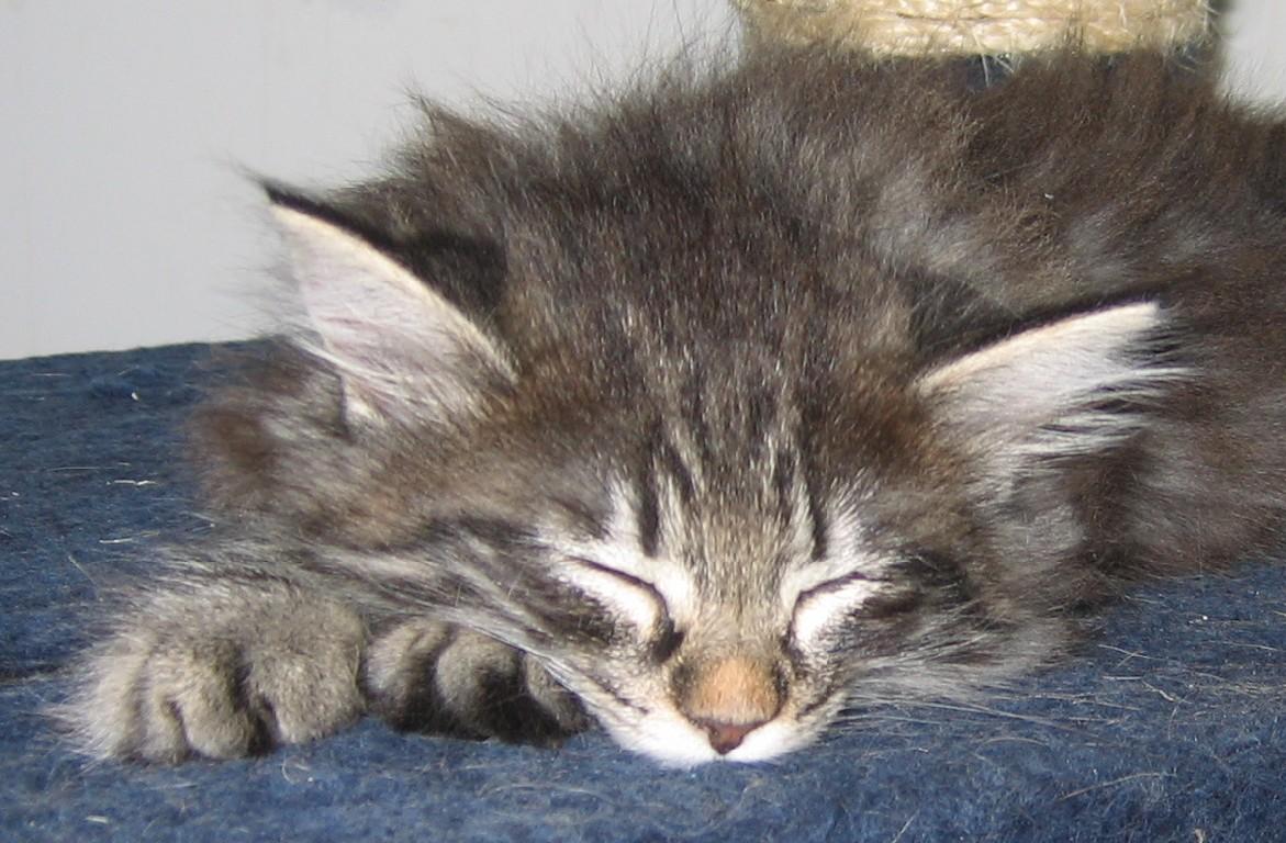 Immagini cuccioli di gatto cucciolo gatto foto immagini di - Cucciolo da colorare stampabili ...